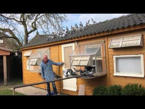 Passion4pigeons-de Jong-Santbergen-Jonge duiven 2017