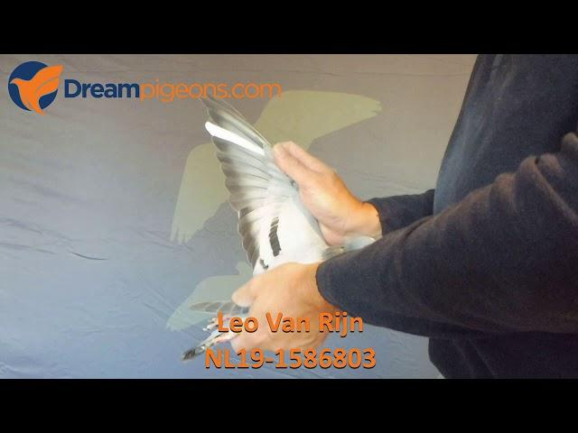 NL19-1586803 Leo Van Rijn Dreampigeons Auction Video