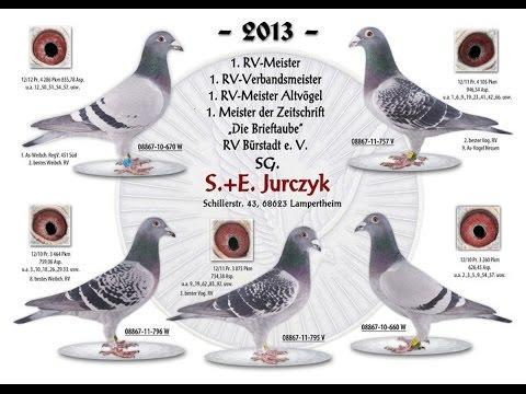 Hodowla Jurczyk  poradnik Hodowcy cz 1
