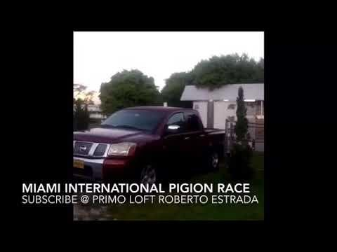 15 millas miami internacional pigeons race