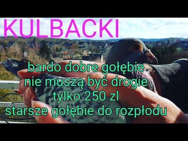 Wysyłka gołębi next shipping of Kulbacki pigeons tel 0049 1511 290 1511  *i invite to cooperation*