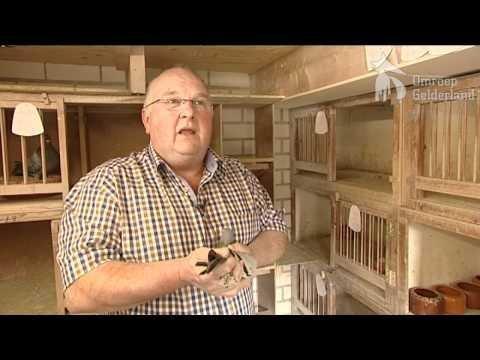 45 duiven gestolen in Wehl