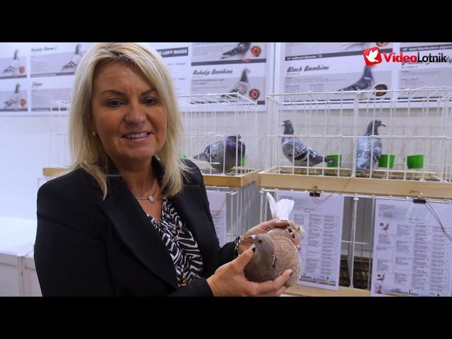 Targi Gołębi - Pigeon Fair - EXPOGołębie - EXPOPigeons Sosnowiec 2020
