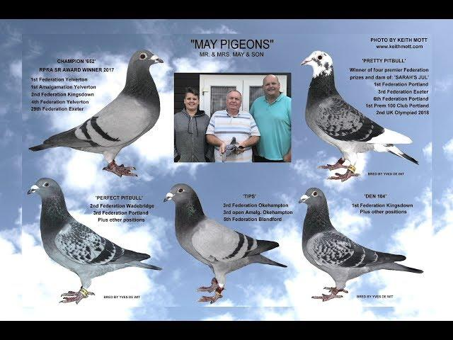 "Video 396: ""May Pigeons"" of Chichester: Premier Pigeon Racers"