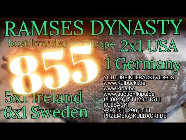 855,na sprzedaz,zum verkauf, father: JANSSEN Brothers X MEULEMANS x mother: Córka Ramsesa 14x1. kon.