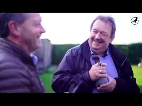 PIPA TV: DVV Pigeons (BE)