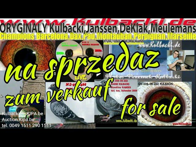 02.01.18,Na sprzedaz zum verkauf for sale 3 gołębie 3 pigeons 3 Tauben contact tel0049 1511 290 1511