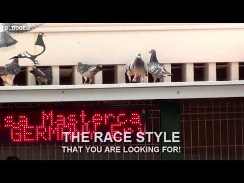 Movie CAR RACE-2 Arona-TENERIFE 2015
