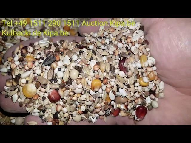 Taubenfuttermischung KARMA DLA GOLEBI PIGEON FOOD video about food f.Pigeons informations Quality