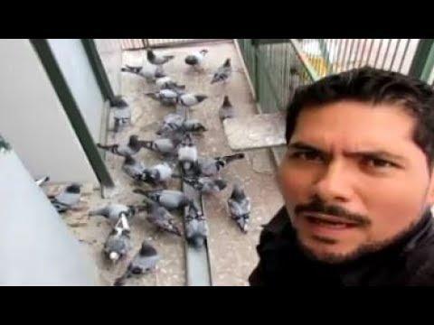 Pasión Colombófila - Pigeon Racing Passion - Guadalajara Mexico