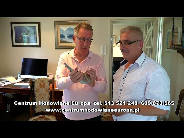 GERARD KOOPPMANN - ERMERVEEN - HOLANDIA