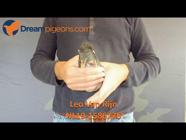 NL19-1586776 - Leo Van Rijn Dreampigeons Auction Video