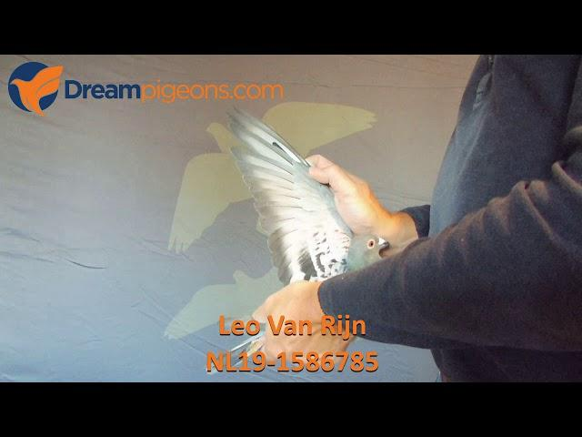 NL19-1586785 Leo Van Rijn Dreampigeons Auction Video