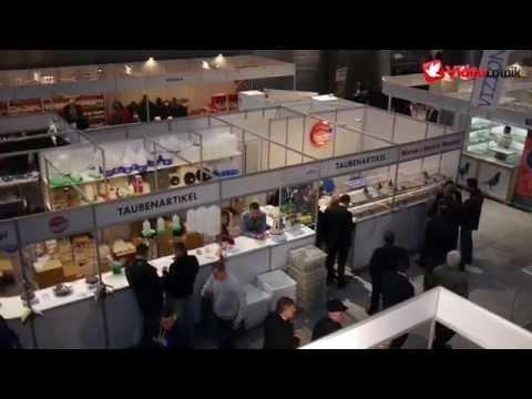 Targi i Wystawa Gołębi Pocztowych w Kielcach 2015