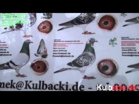Rasa Kulbacki w Hiszpanii Race Kulbacki in Spain Rasse Kulbacki in Spanien Raza Kulbacki en Espana