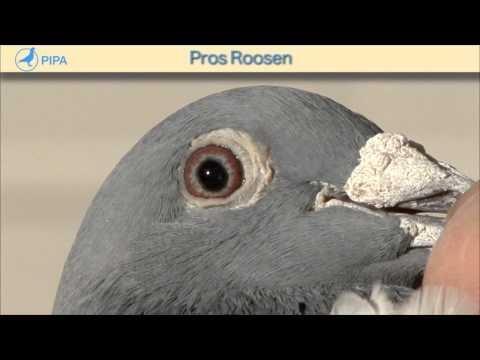 PIPA - Pros Roosen - Blue Prins