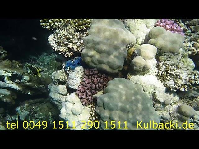 Magnezium + Kalzium + Elektrolit + 8 specjalnych ziół + 6 morskich owoców  (nowość) JAKOŚĆ APTECZNA
