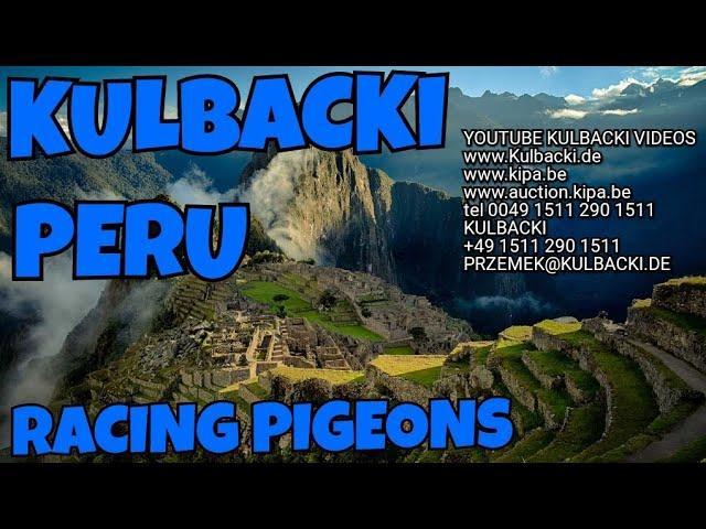 PERU RACING PIGEONS MIXTURE OF KULBACKI 13+1 HERBS MIKSTURA 13+1 ZIOŁOWA GOŁĘBIE TAUBEN,GERMANY