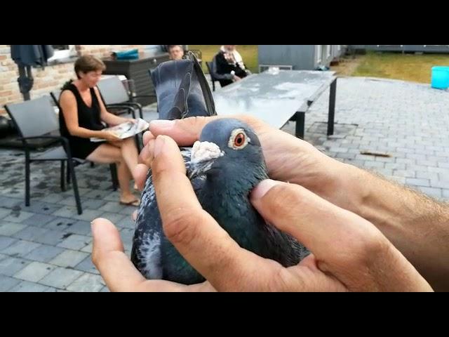 1st Int. Narbonne Old Birds 2018 (De Smeyter-Restiaen)