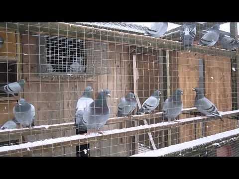 Garcia & Nagelhofer Racing Pigeons
