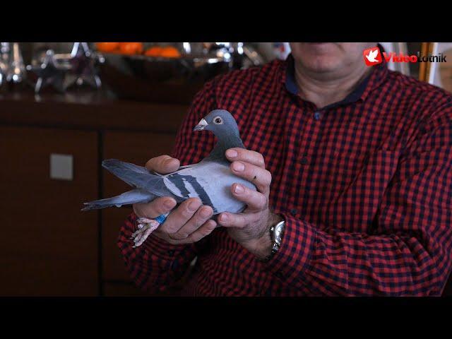 Podsumowanie sezonu i nowe nabytki w hodowli: Faber, Vercammen - Hodowla A&M Buszko