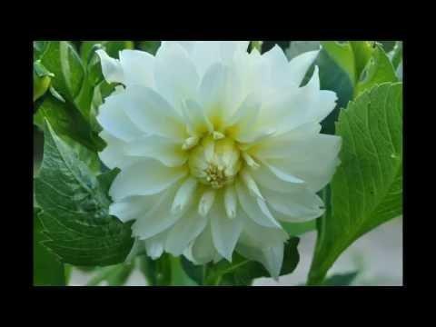 Po ogrodzie Naszych serc przechadza się Jezus Chrystus .