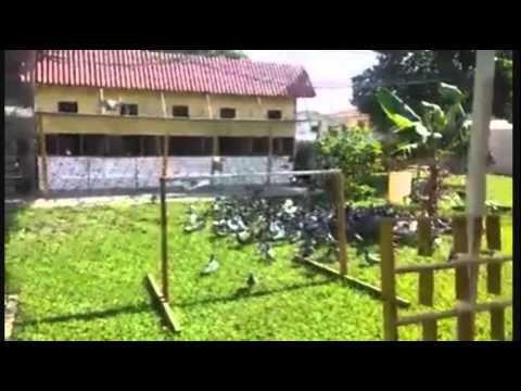 Atlantis Loft of Hialeah Racing Pigeon Club - Fly pen