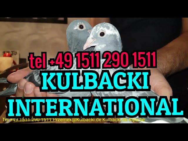 3.März 2018 RASA KULBACKI W KAZDYM GOŁĘBNIKU RACE KULBACKI IN EVERYONE LOFT KULBACKI IM JEDEM SCHLAG