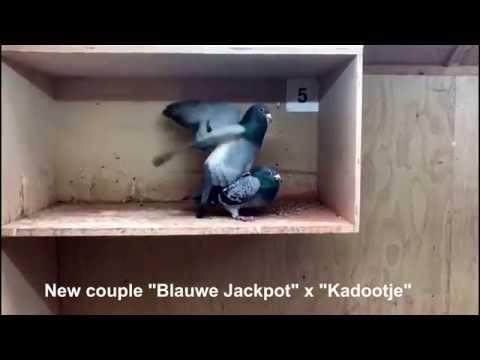 "New couple ""Blauwe Jackpot"" x ""Kadootje"""
