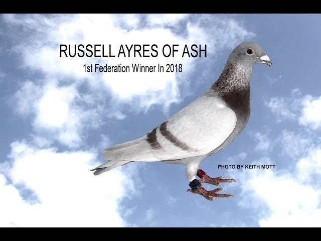 Video 386: Russell Ayres of Ash: Premier Pigeon Racer