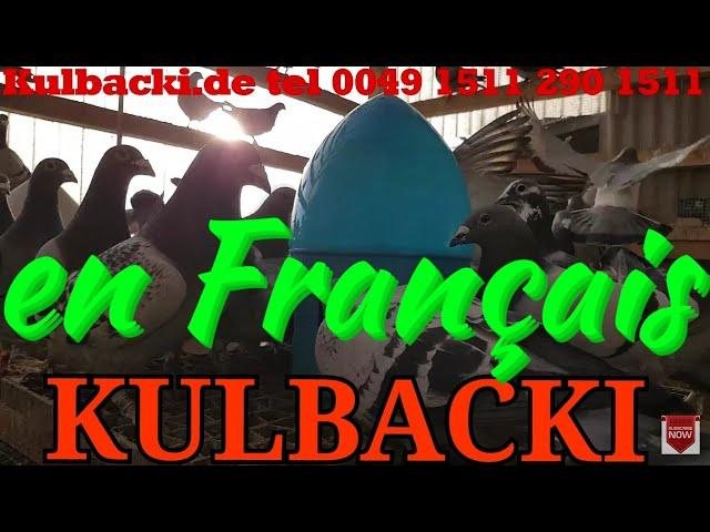 en Français, RACING PIGEONS KULBACKI tel.: +49-1511-290-1511