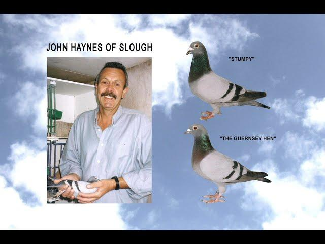 Video 432: John Haynes of Slough: Premier Pigeon Racer
