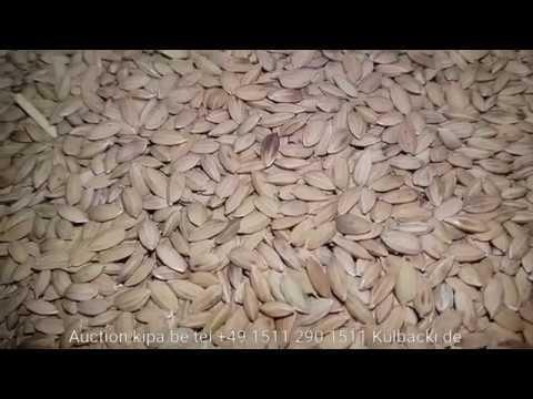 Naturbelassener Reis aus dem Himalaya ryż Rice Racing pigeons Germany pigeon food animalNature الأرز