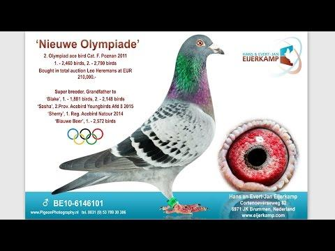 Nieuwe Olympiade the rising star