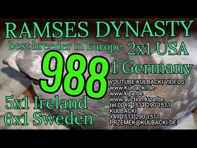 988, ojciec:100% Meulemans x matka:córka Ramsesa 14x1. (6x Sweden 5x Irland 2xUSA 1xGermany)