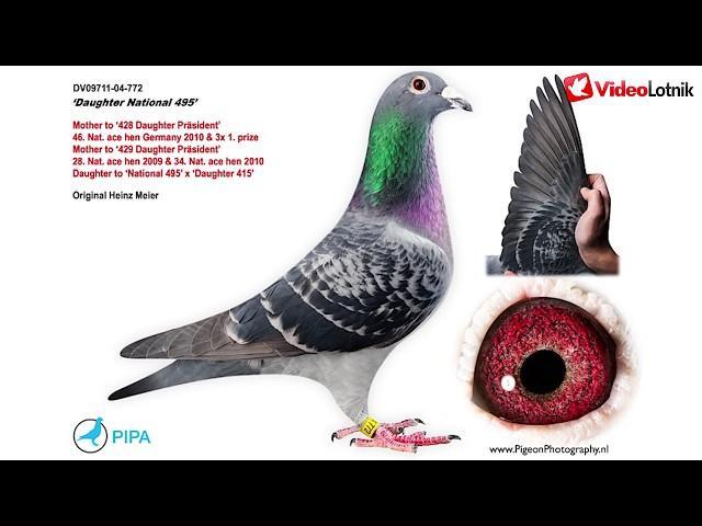 Heinz Meier - krótka historia hodowli