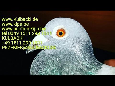 Wysyłka gołębi do USA SHIPPING of my pigeons to America + special juice sok dla gołębi tylko Natura
