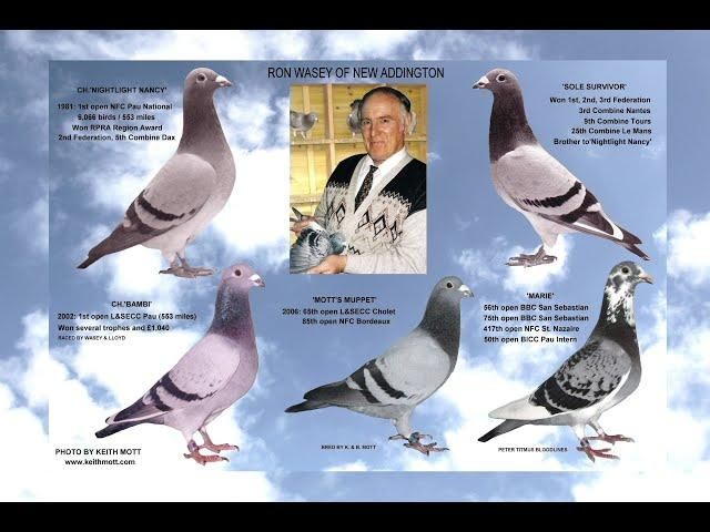 "Video 455: Ron Wasey ""The Full Monty"" Photo Show: Premier Pigeon Racer"