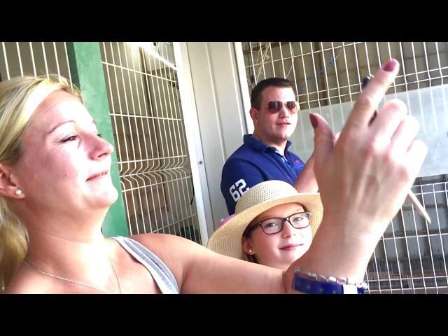 Training - Never Ending Flock of racing pigeons Derby ARONA