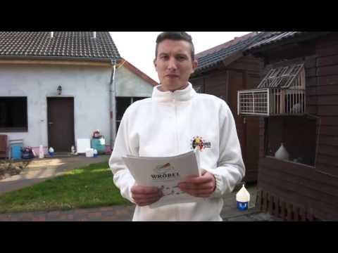 Michał i Patryk Wróbel - hodowla, gołębie, itp. - 21.04.2016r