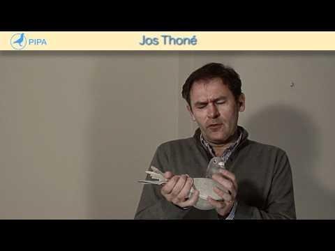 PIPA - Jos Thoné Intro Veiling