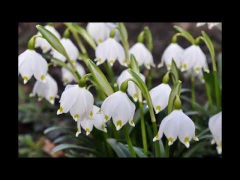 Wiosna na ogródku i w gołębniku.