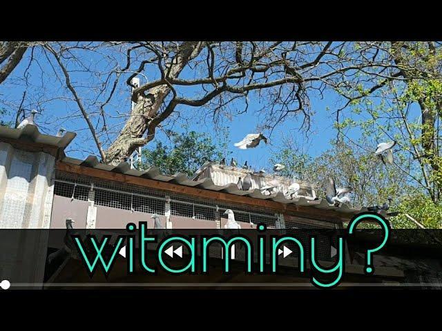 witaminy dla gołębi?Vitamine für Tauben?vitamins for pigeons?فيتامينات الحمام؟витамины для голубей?