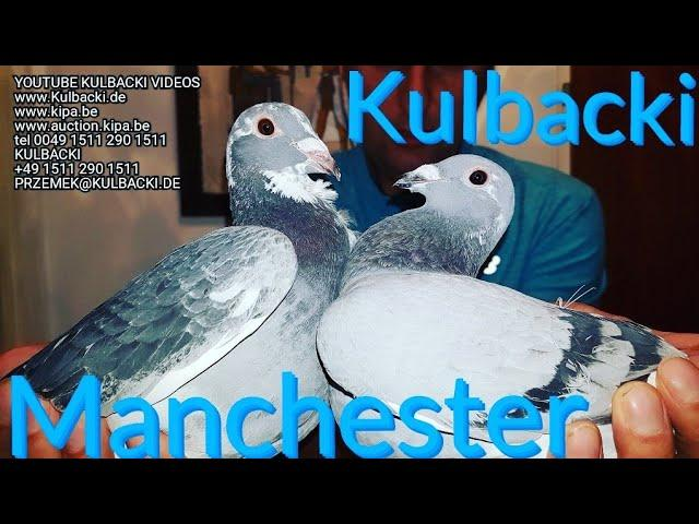 UNITED KINGDOM MANCHESTER KULBACKI RACING PIGEONS SPORT TOP PIGEONS MADE IN GERMANY BY KULBACKI