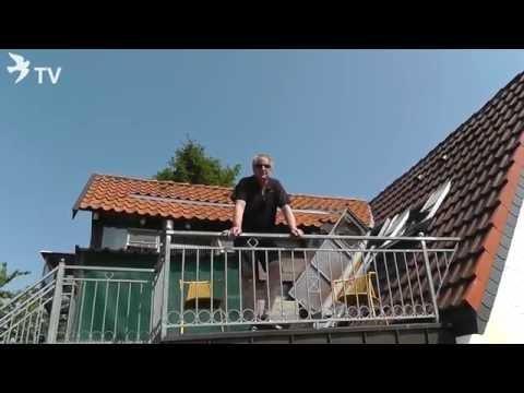 6. Preisflug 2016 Klaus Steinbrink (Brieftauben)
