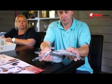 Peter van de Merwe - Stars of Pigeon Racing Sport [ENG]