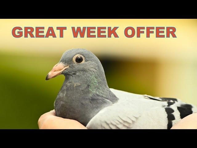 SUPER Week Offer