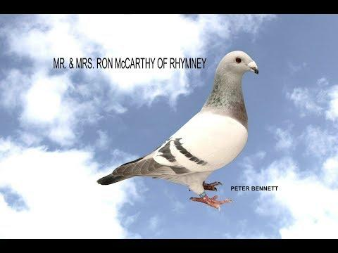 Video 364: Ron McCarthy of Rhymney: Show Pigeons