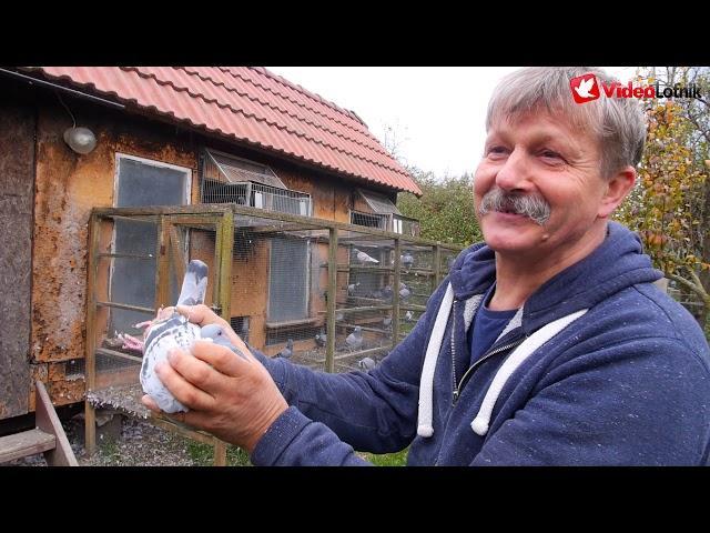 Andrzej Drwięga PZHGP 065 Malbork - prezentacja gołębi
