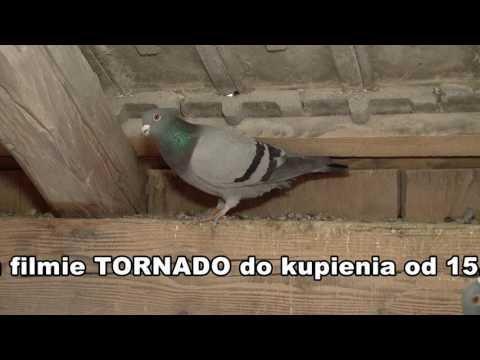 KAROL PASZEK -  Gołębnik Lotowy